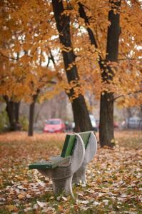őszi pad